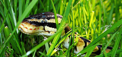 Blog, Beware Of The Snake In The Grass